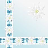 image of edelweiss  - Decorative checkered pattern with Edelweiss as background - JPG