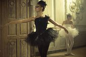 foto of black swan  - Black and white swan - JPG
