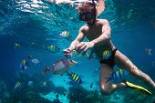 stock photo of school fish  - Young man snorkeling and feeding fish in a tropical sea - JPG
