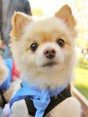 pic of spayed  - a cute dog at a local park - JPG