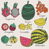 picture of dragon fruit  - Bright tropical fruit set in vector - JPG
