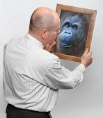 Funny man and mirror with his monkey face. Human evolution and Darwin theory concept.