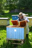 Experienced senior beekeeper making inspection in apiary