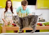 picture of homemaker  - Cat watching to the camera with married couple on the background at the kitchen - JPG