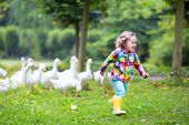 pic of feeding  - Funny happy little girl adorable curly toddler wearing a colorful rain jacket running in a park playing and feeding white geese birds on a warm autumn day in a city forest - JPG