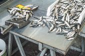 image of piraeus  - Fish on ice in the market - JPG
