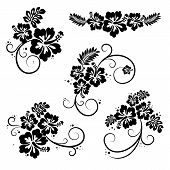 stock photo of hibiscus  - Collection of five flourish hibiscus decorative design elements - JPG