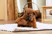 pic of cute puppy  - Cute puppy lying on carpet near fireplace in room - JPG