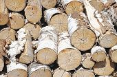 foto of piles  - Log birch tree white bark cut pile - JPG