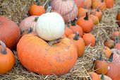 picture of fall decorations  - some pumpkin with hay for Fall decoration at market place - JPG