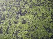 pic of algae  - Filamentous algae covers the top of the water of a ditch by growing on aquatic plants - JPG
