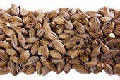 stock photo of malt  - Malt grains - JPG