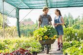picture of wheelbarrow  - Gardeners discussing while pushing plants in wheelbarrow at greenhouse - JPG