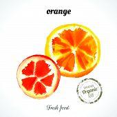 stock photo of exotic_food  - Watercolor orange slice - JPG