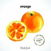 image of exotic_food  - Watercolor orange - JPG