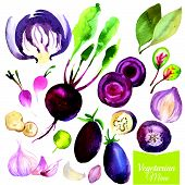 stock photo of radish  - Watercolor vegetables and herbs - JPG