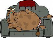 Cow potato pic.