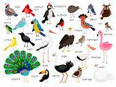 Vector Birds. European And Asian Bird Set Isolated On White Background, Cardinal And Toucan, Bullfin poster