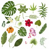Tropical Leaves And Flowers. Set Isolated Palm And Flowers Exotic Leaf Plant Floral Hawaii Botany De poster
