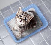 Cat top view sitting in litter box on bathroom floor poster