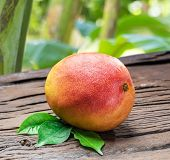 Ripe mango fruit with mango leaves on wooden background. Organic food. poster