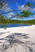 picture of mckenzie  - Lake McKenzie is one of the popular freshwater lake at Fraser Island Australia - JPG