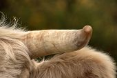 Cows In The Pasture. White Cattle Living Outdoors In Nature. Meat Breed. Close-up Of Head With Horn. poster
