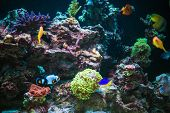 Marine Aquarium Reef And Tropical Fishes. Marine Plants And Animals In A Contained Environment. poster