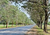 image of lapacho  - Road Along With Trees On Both Sides - JPG