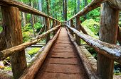 stock photo of wilder  - boardwalk in forest - JPG