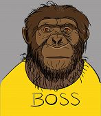 foto of chimp  - Portrait of a monkey dressed in a yellow T - JPG