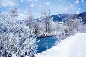 Winter rural landscape with river and trees covered with snow