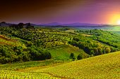 stock photo of farmhouse  - Hill of Tuscany with Vineyard in the Chianti Region Sunrise - JPG