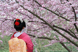 picture of japan girl  - Geisha and blooming Sakura tree, Tokyo, Japan