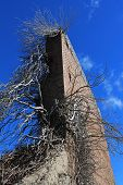 stock photo of blast-furnace  - Tree growing through the remnants of the Lithgow Blast Furnace - JPG