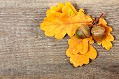 stock photo of acorn  - Acorns and oak leaves on old wooden background - JPG