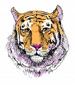 image of wildcat  - Artwork tiger - JPG