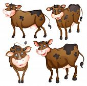 pic of moo-cow  - Illustration of a brown cow with different posts - JPG