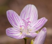foto of early spring  - Tiny bloom of Narrow - JPG