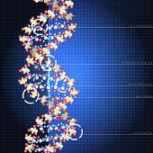 picture of double helix  - Dna double helix molecules and chromosomes - JPG