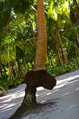 FANTASTIC PALM TREE