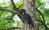 pic of raccoon  - Colorful and crisp image of raccoon  - JPG