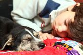 stock photo of little puppy  - boy and little puppy sleeping on the bed - JPG