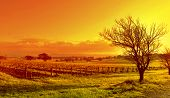 Vineyard Landscape Sunset