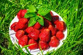 pic of strawberry  - strawberries on a plate - JPG