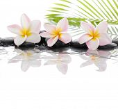 foto of frangipani  - spa concept with zen stones and Frangipani and palm leaf  - JPG