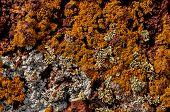 foto of lichenes  - Lichen Texture Pattern Background on the Floor - JPG
