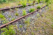 stock photo of weed  - Different types of weeds grow and flourish between the rusty railroad - JPG