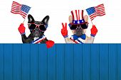 4Th Oh July Row Of Dogs poster