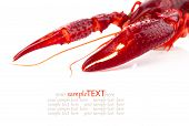 picture of crawfish  - pincers of crawfish isolated on white background - JPG